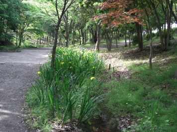 2008_05170021