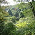 中央公園の森