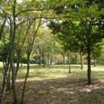 中央公園の緑