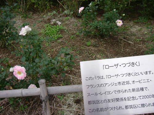 つづきのバラ
