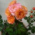 2006_05 薔薇