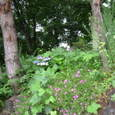 アルプス公園の花