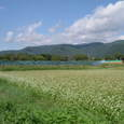 2007秋 そば畑と空